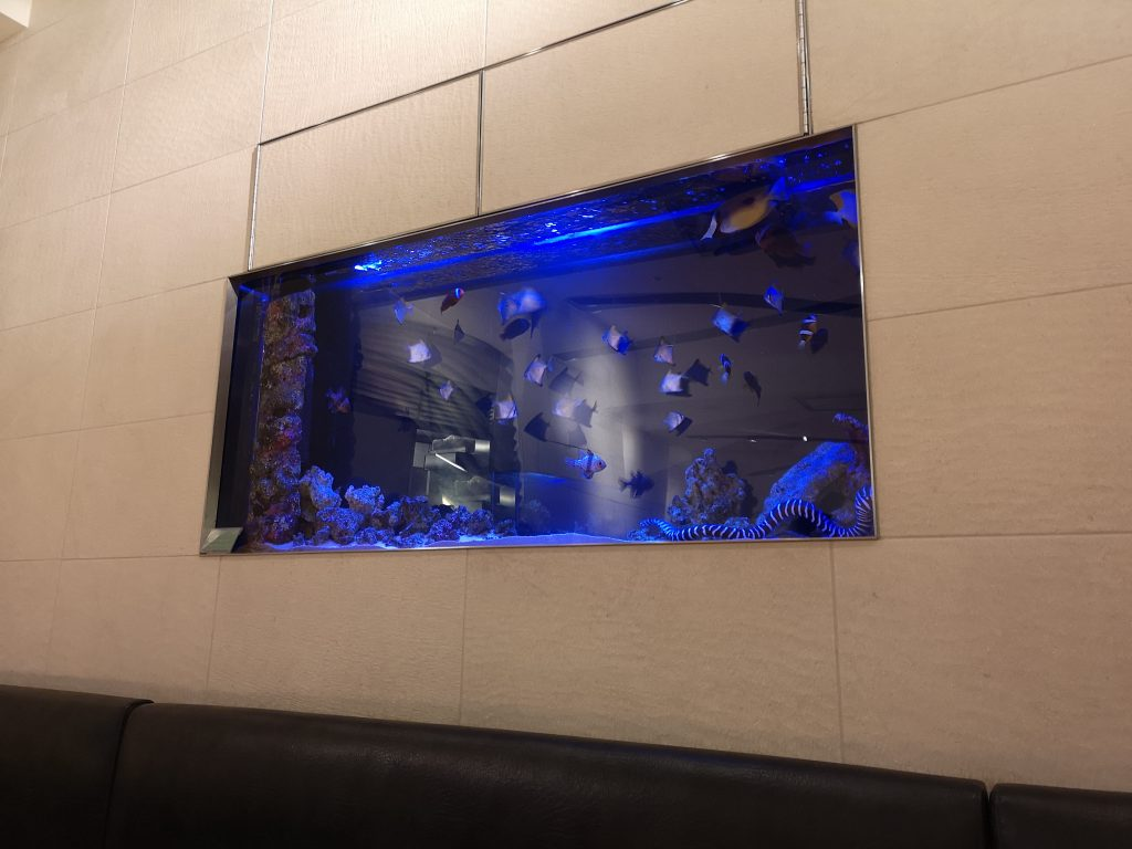 シャッターズ横浜ルミネの水槽